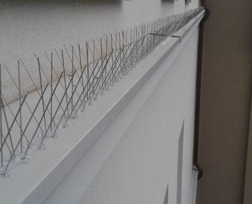 Taubenabwehr Taubenkotreinigung Spikes Stacheln Schädlingsbekämpfung Allessauber Kim
