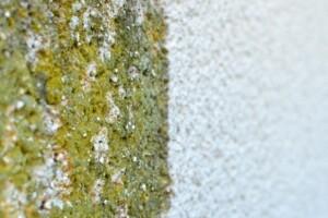 Allessauber Fassadenreinigung Musterfläche