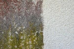 Allessauber Fassadenreinigung Musterfläche Deutsch-Wagram