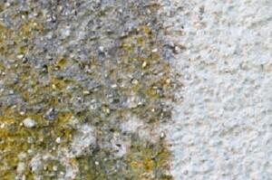 Allessauber Fassadenreinigung Musterfläche Gänserndorf