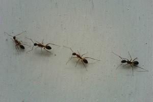 Ameisenbekaempfung ameise bekaempfen abwehr schaedlingsbekaempfung kammerjaeger allessauber