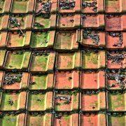 Dachrinnenreinigung Laub entfernen Dachreinigung Allessauber