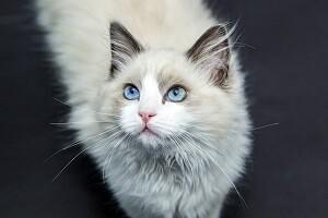 Katzenurin entfernen Allessauber Kim