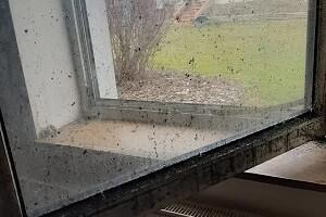 Messie Wohnung Reinigen Desinfektion Allessauber Kim Spezialgebäudereinigung