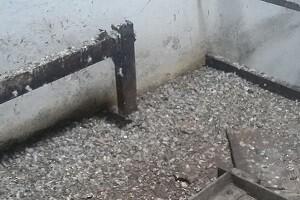 Taubenkot Reinigung Allessauber Kim Gebäudereinigung Reinigungsfirma