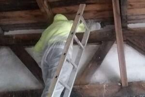 Taubenkotentfernung Allessauber Kim Schädlingsbekämpfung Gebäudereinigung