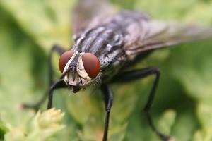 fliegenbekaempfung fliege bekaempfen abwehr schaedlingsbekaempfung kammerjaeger allessauber