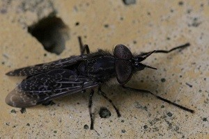 fliegenbekaempfung stechfliege bekaempfen abwehr schaedlingsbekaempfung kammerjaeger allessauber