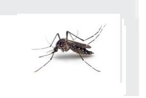 muekenbekaempfung stechmueke bekaempfen abwehr schaedlingsbekaempfung kammerjaeger allessauber